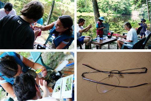 Aug18 Dragonflies